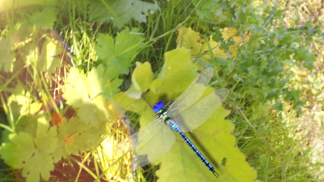 film en 3D la libellule